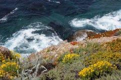 El mirar abajo la costa costa de California con las flores salvajes y las ondas de agua blanca Foto de archivo