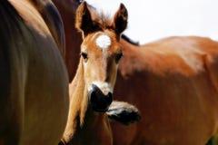El mirar a escondidas del caballo del bebé Fotografía de archivo libre de regalías