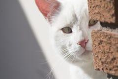 El mirar a escondidas del gato Foto de archivo