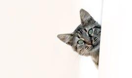 El mirar a escondidas del gato imagenes de archivo