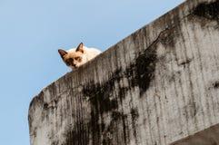 El mirar a escondidas del gato Fotos de archivo