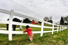 El mirar fijamente del niño y del caballo Imágenes de archivo libres de regalías