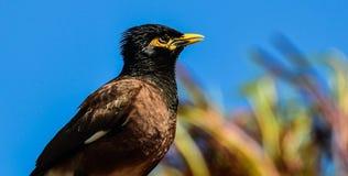 El mirar fijamente del pájaro Fotografía de archivo