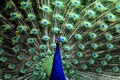 El mirar fijamente detrás en usted Imagen de archivo libre de regalías
