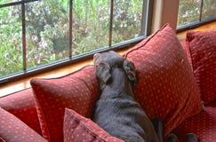 El mirar fijamente hacia fuera la ventana (HDR) Fotos de archivo libres de regalías
