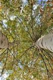El mirar para arriba el cielo encima de un árbol y de una luz enormes Fotografía de archivo