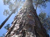 El mirar para arriba el árbol imagen de archivo