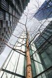El mirar para arriba el árbol joven rodeado por los rascacielos Imagen de archivo libre de regalías
