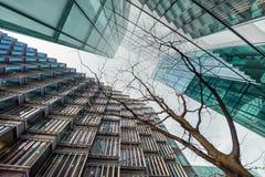 El mirar para arriba el árbol joven rodeado por los rascacielos Foto de archivo libre de regalías