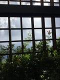 El mirar para arriba el cielo azul y las vides Fotos de archivo libres de regalías