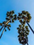 El mirar para arriba las palmeras contra un cielo azul Imagenes de archivo