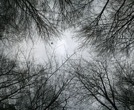 El mirar para arriba las ramificaciones de árbol descubiertas Fotografía de archivo libre de regalías