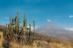 El Misti volcano in Peru desert with a cactus in front near Arequipa