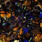 El modelo colorido del fondo de la tolerancia hecho de muchas mariposas, Imagen de archivo libre de regalías