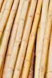 El modelo de bambú Imágenes de archivo libres de regalías