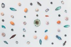 El modelo de la flora en plano azul del fondo pone concepto minimalistic Fotos de archivo libres de regalías