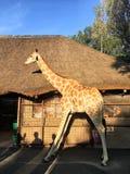 El modelo de la jirafa se coloca delante de la casa Fotografía de archivo libre de regalías