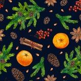 El modelo de la Navidad de la acuarela con el abeto ramifica, las bayas rojas, conos Foto de archivo libre de regalías
