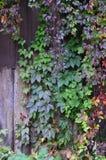 El modelo de las hojas de otoño Fotografía de archivo libre de regalías