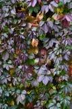 El modelo de las hojas de otoño Imagen de archivo libre de regalías