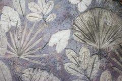 El modelo de las hojas imprimió en el piso del cemento Fotografía de archivo libre de regalías