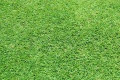 El modelo del césped del verde del fondo de la hierba verde texturizó el fondo imagenes de archivo