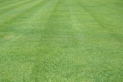 El modelo del césped del verde del fondo de la hierba verde texturizó el fondo foto de archivo libre de regalías