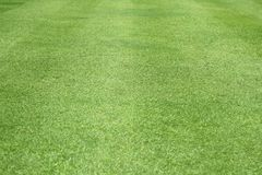 El modelo del césped del verde del fondo de la hierba verde texturizó el fondo fotografía de archivo