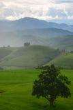 El modelo del campo colgante verde del arroz Foto de archivo