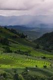 El modelo del campo colgante verde del arroz Imagen de archivo