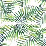 El modelo floral maravilloso tropical herbario verde hermoso brillante del verano de Hawaii de una palma y de un monstera tropica ilustración del vector