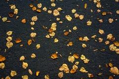 El modelo hermoso del amarillo del otoño se va en el asfalto de la pista de despeque imágenes de archivo libres de regalías