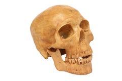 El modelo humano del cráneo aislado incluye la trayectoria Imagen de archivo