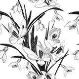 El modelo inconsútil con el snowdrop florece (blanco y negro) Imágenes de archivo libres de regalías