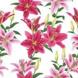 El modelo inconsútil con los lirios coloridos florece en el fondo blanco Imagen de archivo libre de regalías