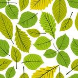 El modelo inconsútil de las hojas hermosas, vector el backgr sin fin natural Fotos de archivo libres de regalías