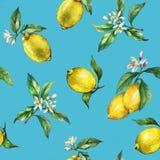 El modelo inconsútil de las ramas de los limones frescos de los agrios con las hojas y las flores del verde Imágenes de archivo libres de regalías