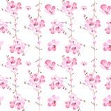 El modelo inconsútil del ejemplo de la acuarela de Sakura rosado florece Imagen de archivo libre de regalías