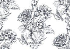 El modelo inconsútil del vector con la mano dibujada subió las flores y las hojas en blanco imagenes de archivo