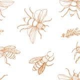 El modelo inconsútil elegante con las abejas de la miel da exhausto con las líneas de contorno en el fondo blanco Apicultura o ap Ilustración del Vector