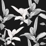 El modelo inconsútil, los ficus blancos negros Elastica se va en fondo negro stock de ilustración