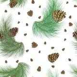 El modelo inconsútil con los pinecones y el árbol de navidad realista ponen verde ramas Abeto, diseño de la picea o fondo para la Fotos de archivo libres de regalías