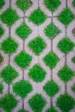 El modelo, las malas hierbas verdes llena las baldosas de colocación Fotografía de archivo libre de regalías
