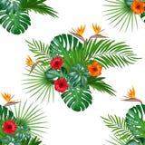 El modelo tropical dibujado mano inconsútil del vector con el hibisco florece ilustración del vector