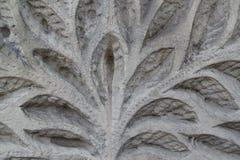El modelo vegetal que se ha cortado en una piedra Foto de archivo