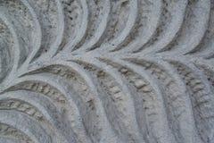 El modelo vegetal que se ha cortado en una piedra Foto de archivo libre de regalías