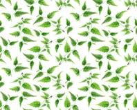 El modelo verde en blanco, verde de la rama se va ilustración del vector