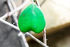 El modelo y la textura creativos de la hoja del verde del corazón diseñan foto de archivo