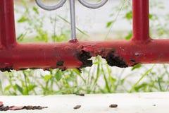 El moho destruye los aceros Imagen de archivo
