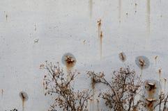 El moho en fondo del metal fotografía de archivo libre de regalías